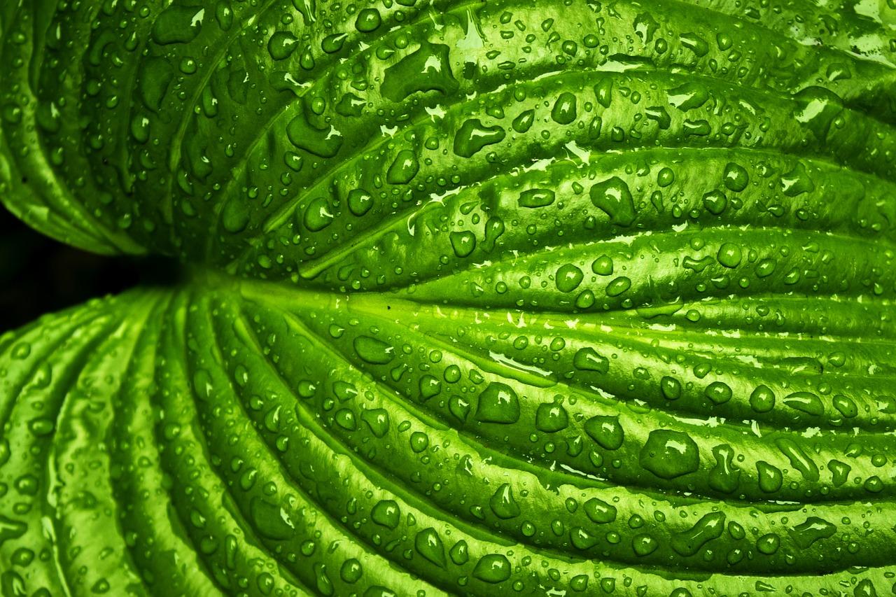 מה ניתן לגדל בחורף במערכת הידרופונית
