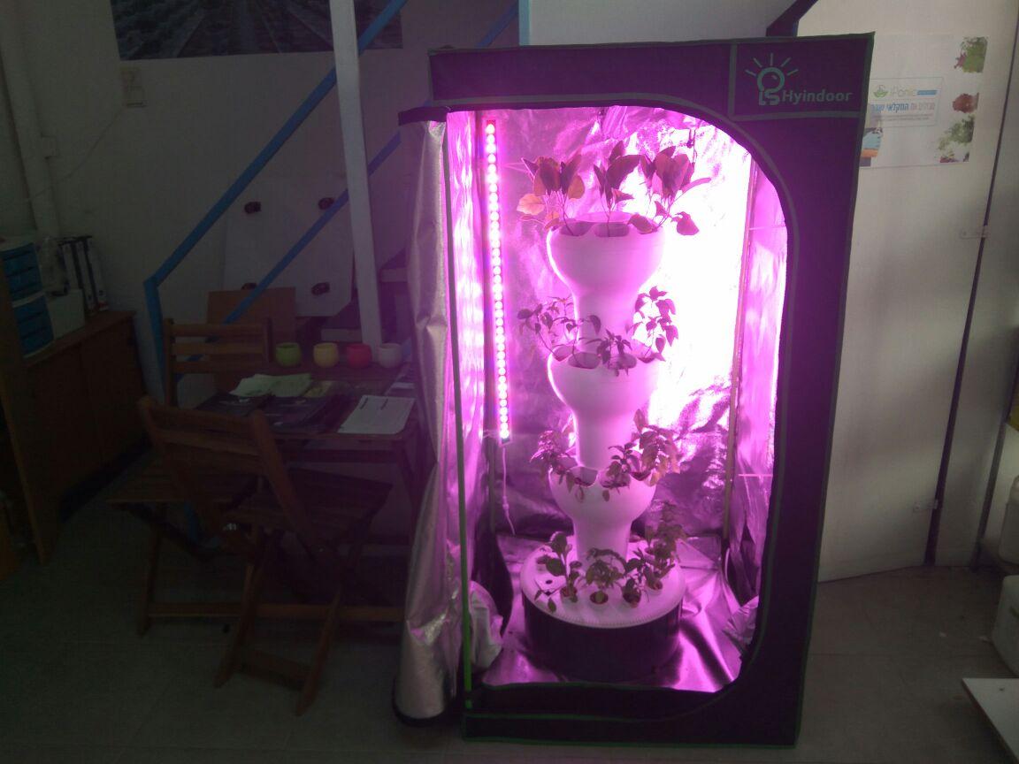 גידול צמחים הידרופונים בתוך הבית בחלל גידול ייעודי